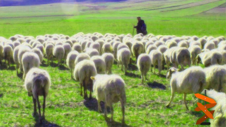 Üniversite Sınavında Başarının Sırrı Neden Çoban Olmaktır?